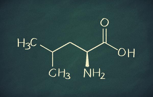 Blackboard diagram of BCAA leucine