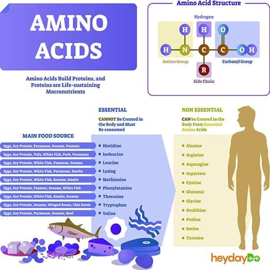 Amino Acid Chart - heydayDo image