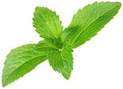 Small pic of stevia leaves 1 - heydayDo image